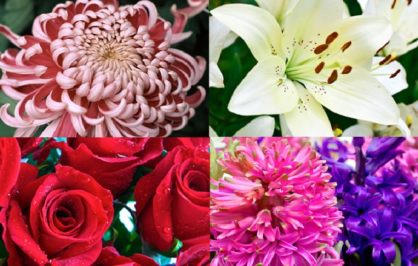 5 Types of Flowers That Will Convey your Love to your Partner